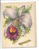 Orchidée Violette. A Système. - Anniversaire