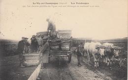 La Vie En Champagne Les Vendanges Moët Et Chandon, Attelage, Animée - Frankreich
