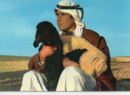 Jordanie Un Shepherd Un Berger Moutons Agneaux - Jordan