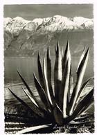 V5294 Lago Di Garda - Agave - Panorama / Non Viaggiata - Medicinal Plants