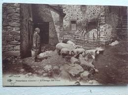 Mourioux élevage De Porcs - France