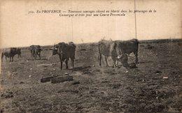 14428       EN PROVENCE  TAUREAUX SAUVAGES VIVANT EN LIBERTE DANS LES PATURAGES - Autres Communes