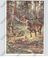 JAGD / Hunting / Jacht / Caccia / Chase / Caza / Lowiectwo, Hirsch, Künstler-Karte G. Majewitz - Caccia