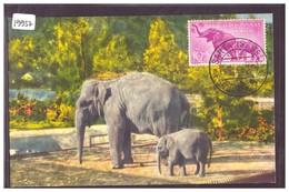 CARTE MAXIMUM - GUINEE ESPAGNOLE - ELEPHANTS - TB - Equatorial Guinea