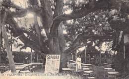 ARBRE Tree - 78 - VILLENNES : Le SOPHORA Apporté Du JAPON En 1803 - CPA -  Bome Boom Albero árbol - Bäume