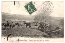 AGRICULTURE - ELEVAGE - Jumenterie De Tiaret (Algérie) - Poulains De Sevrage Dans Leur Paddock - CHEVAUX - Allevamenti