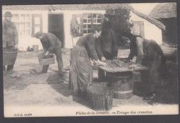 CPA -  Belgique,  LA PANNE, Pêche De La Crevette - Triage Des Crevettes - De Panne