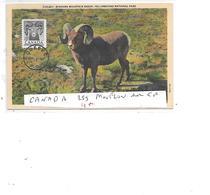 CANADA N° 259 MOUFLON SUR CP - 1952-.... Règne D'Elizabeth II