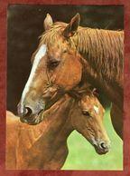 Pferd Mit Fohlen (92921) - Pferde