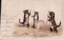 Chats Humanisés à La Fenaison - Cats
