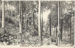 Ronquières - Bois Des Rocs 1910 - Braine-le-Comte