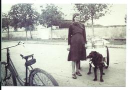 MONTREUIL BELLAY - Yvette LEMOINE (cliché 1937) Attelage De Chien - Livraison De Lait Porte à Porte - Montreuil Bellay