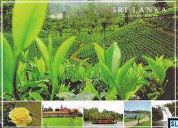 Sri Lanka Postcards, Nuwara Eliya, Tea, Postcard, Postcrossing - Sri Lanka (Ceylon)