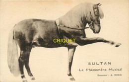 Cirque, Le Cheval Sultan, Phénomène Musical, Dresseur Rossi - Circus