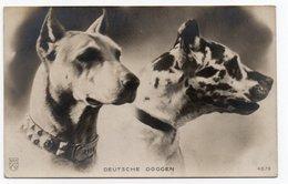 ANIMAUX - CHIEN * DOG * CARTE PHOTO DOGUE * DEUTSCHE DOGGEN * Carte N° 4879 - Dogs