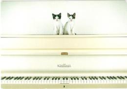 2 Chats  Piano - Cats - Poezen -katzen- Gatto - Chats
