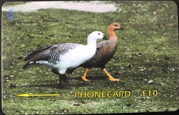 FALKLAND  -  Phonecard  - Upland Geese  -  $ 10 - Falklandeilanden