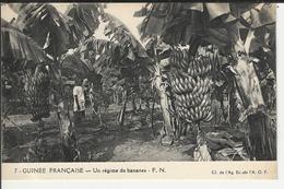 GUINEE Française Un Régime De Banane - Guinée