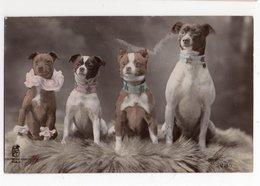 ANIMAUX - CHIEN * DOG * RATIER * Carte Glacée & Colorisée * KF éditeurs D'Art, Paris - Cani