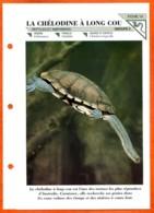 CHELODINE A LONG COU Tortue  Animal  Illustrée Documentée Animaux Fiche Dépliante - Animales