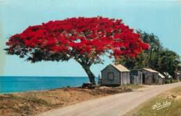 GUADELOUPE  VILLAGE - Guadeloupe