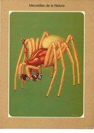 Fiche Médicale Laboratoire Geigy Pesantine - Merveilles De La Nature - Walckenaera Acuminata Araignée - Animals