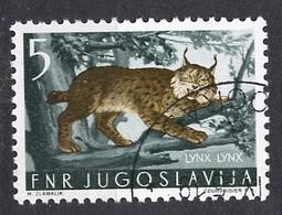 Yougoslavie - Jugoslawien - Yugoslavia 1954 Y&T N°644 - Michel N°739 (o) - 5d Lynx - Gebraucht