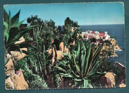 JARDIN EXOTIQUE DE MONACO - L'Allée Supérieure, Agave Americana - Monaco