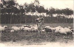 FR40 LANDES - Berger Echassier Landais Et Ses Moutons - Animée - Belle - Sonstige Gemeinden