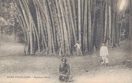INDES FRANCAISES / BAMBOUS GEANTS - Inde