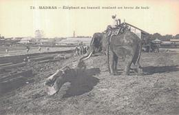 MADRAS / ELEPHANT AU TRAVAIL ROULANT UN TRONC DE TECK - Inde