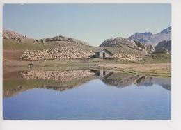 Aspect De La Vie Pastorale (n°1599 Alpine édition) - Paesani