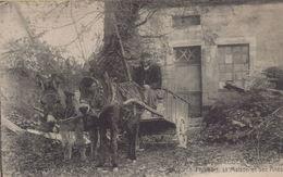Saint-Léger-Vauban : Philibert, Sa Maison Et Ses Anes - Other Municipalities
