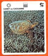 CARET OU CAOUANNE  Reptiles Animal  Tortue Fiche Illustree Documentée - Animales
