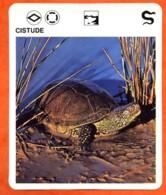CISTUDE  Reptiles Animal  Tortue Fiche Illustree Documentée - Animales