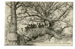 Sénégal - Dakar - Baopabs (groupe D'enfants Sur Une Branche) Circulé 1931, Sous Enveloppe - Sénégal