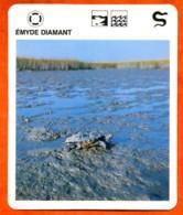 EMYDE DIAMANT  Reptiles Animal  Tortue Fiche Illustree Documentée - Animales