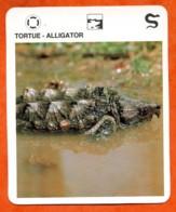 TORTUE ALLIGATOR   Reptiles Animal Fiche Illustree Documentée - Animales