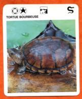 TORTUE BOURBEUSE  Reptiles Animal Fiche Illustree Documentée - Animales