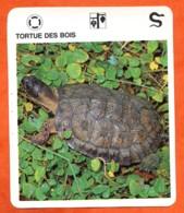 TORTUE DES BOIS   Reptiles Animal Fiche Illustree Documentée - Animales