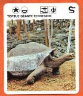 TORTUE GEANTE TERRESTRE Reptiles Animal Fiche Illustree Documentée - Animales