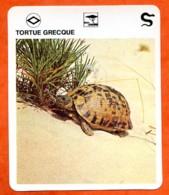 TORTUE GRECQUE Reptiles Animal Fiche Illustree Documentée - Animales