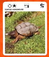 TORTUE HARGNEUSE Reptiles Animal Fiche Illustree Documentée - Animales
