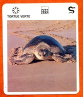 TORTUE VERTE  Reptiles Animal Fiche Illustree Documentée - Animales