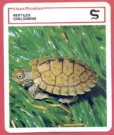 Tortue Carte Du Mississippi Classification Reptiles Chéloniens Fiche Illustree Documentée Animaux Animal - Animales