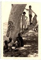Photo Originale Sénégal & Jeunes Enfants Au Pied D'un Manguier Oasis Vers 1950/60 - Personnes Anonymes