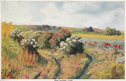 AK Feld Mit Blumen - Künstlerkarte - Ca. 1910  (48895) - Illustrators & Photographers