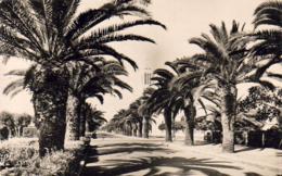 MAROC  FEDALA  Avenue Charles De Gaulle  ..... - Autres