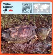 TORTUE ALLIGATOR Reptile Animaux Animal Fiche Illustree Documentée - Animales