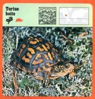 TORTUE BOITE   Reptile   Animaux Animal   Fiche Illustree Documentée - Animales